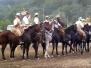 Cavalli a Carraia