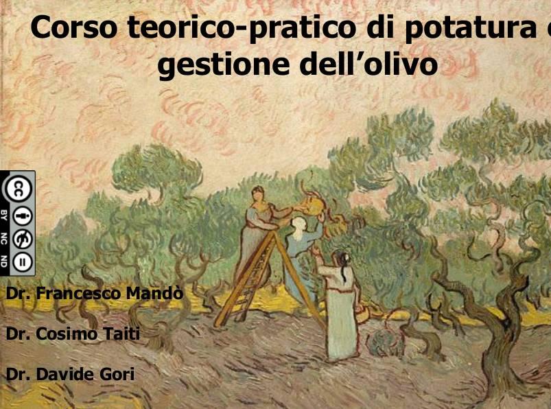 scheda-olivo